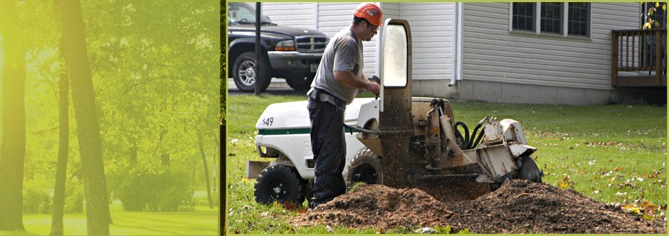 Stump Grinding | Spokane, WA | Aardvark Tree Service | 509-891-7650