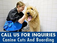 Pet Boarding - Eagle River, WI - Canine Cuts And Boarding