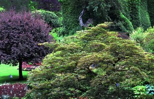 Tree Service | Port Chester, NY | Coperine Landscaping | 914-403-3885