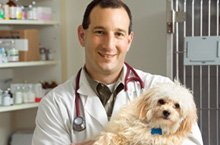 pet hospital - Rock Falls, IL - Advanced Animal Health Center