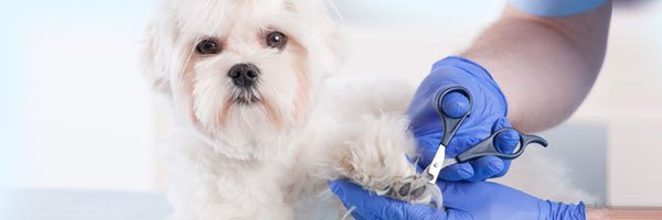 Animal Grooming Services