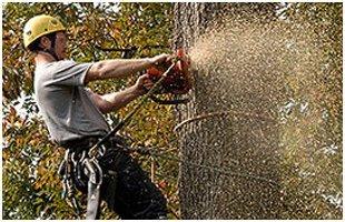 Tree Trimming | Brooklet, GA | Floyd Tree Service | 912-842-9770