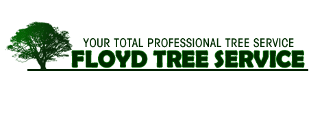 Tree Removal | Brooklet, GA | Floyd Tree Service | 912-842-9770