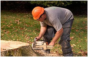 Stump Removal | Brooklet, GA | Floyd Tree Service | 912-842-9770