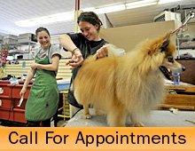 Pet Grooming Salon - Bremerton, WA - Kim's Puppy Love Grooming