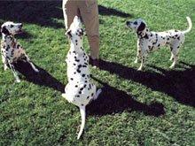 Pet training - Taylorville, IL   - Dogwood Pet Lodge