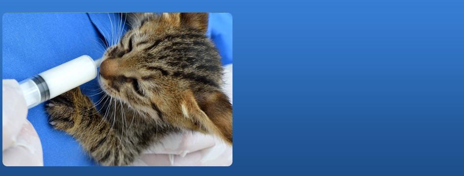 Internal Medicine | Louisville, KY | All About Pets Animal Hospital | 502-403-2795