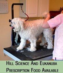 veterinarian - Grenada, MS - Veterinary Associates, PA - dog