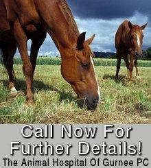 Veterinary Clinic - Wadsworth, IL - The Animal Hospital Of Gurnee PC - Horse