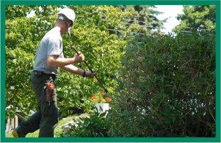 Tree Topping | Bonnerdale, AR | Jay-Birds Tree Service | 501-991-3611