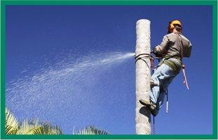 Tree Service | Bonnerdale, AR | Jay-Birds Tree Service | 501-991-3611
