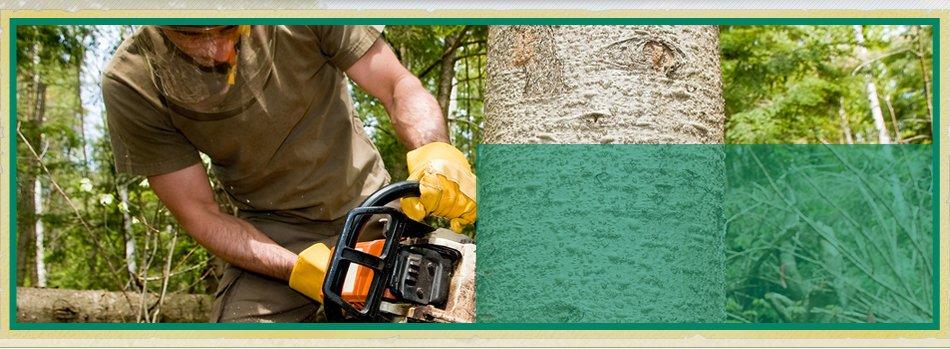 Tree Shaping | Bonnerdale, AR | Jay-Birds Tree Service | 501-991-3611
