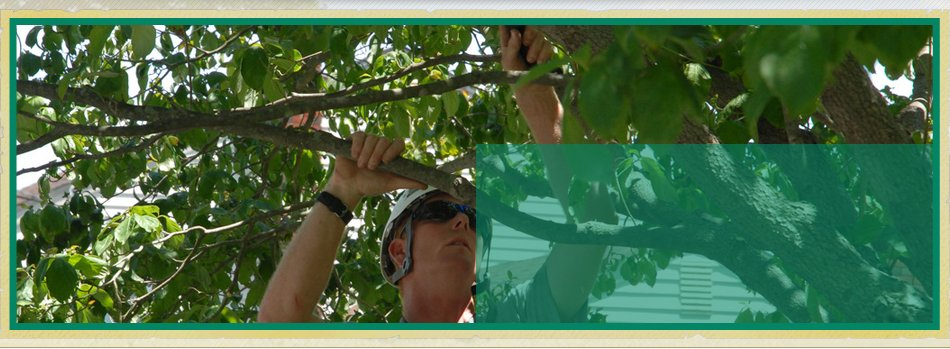 Residential Tree Trimming | Bonnerdale, AR | Jay-Birds Tree Service | 501-991-3611