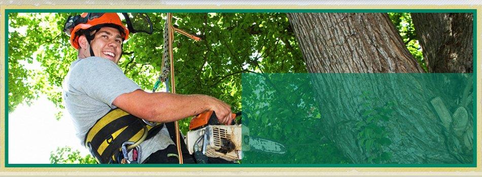 Tree Removal | Bonnerdale, AR | Jay-Birds Tree Service | 501-991-3611