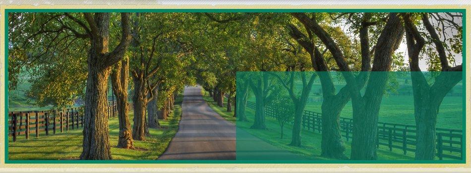 Landscaping | Bonnerdale, AR | Jay-Birds Tree Service | 501-991-3611