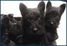 Pet Grooming - Dunnsville, VA - Skyview Kennels LLC - dogs