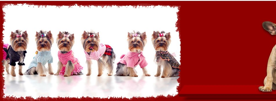 Dog o mat self and full service dog grooming ann arbor pa a do it yourself and full service dog groomer solutioingenieria Image collections