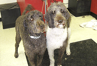 Dog-O-Mat - Groomed Dogs