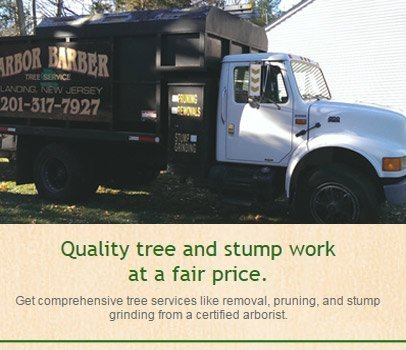 Tree shaping | Roxbury, NJ | Arbor Barber | 973-479-9555 | 201-317-7927