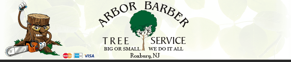 Tree removal | Roxbury, NJ | Arbor Barber | 973-479-9555