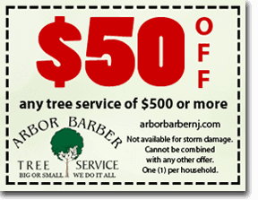 $50 OFF any tree service of $500 or more