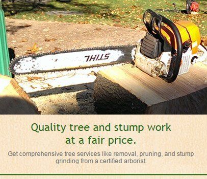 Tree pruning | Roxbury, NJ | Arbor Barber | 973-479-9555 | 201-317-7927
