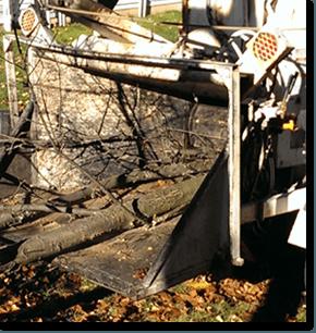 Tree work | Roxbury, NJ | Arbor Barber | 973-479-9555 | 201-317-7927