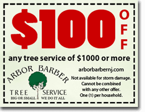 $100 OFF any tree service of $1000 or more