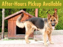 Pet Grooming Services - Dothan, AL - For Paws Only Pet Resort, Inc.