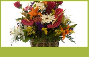 Fresh Flowers & Arrangements | Willmar, MN | Late Bloomers Floral & Gift, LLC | 320-235-4940