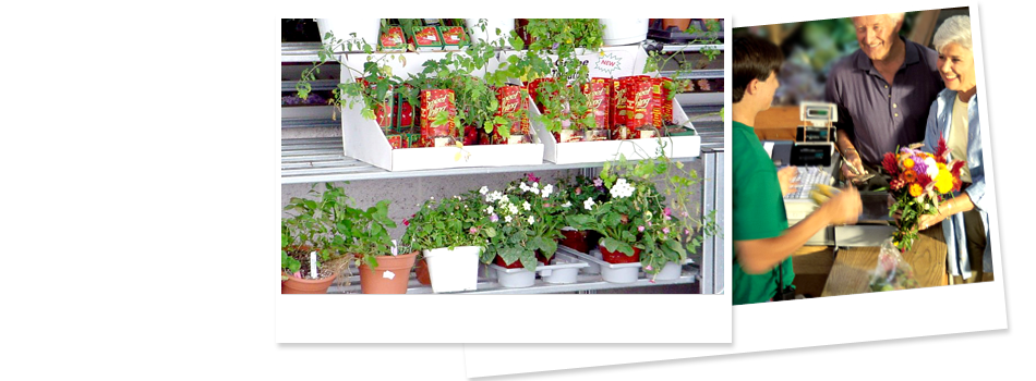 Plants | Willmar, MN | Late Bloomers Floral & Gift, LLC | 320-235-4940
