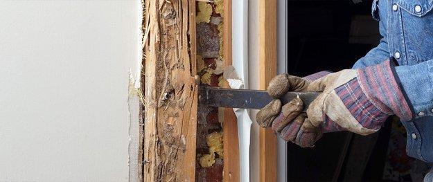 Termite repair