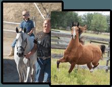 horse riding lessons - Romulus, MI - rushlow's arabian farms-lesson-horse