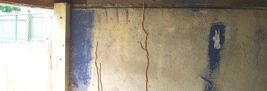 Termite mud tunnels