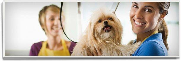 Pet grooming | Farmington, MO | Worrynought Kennels Inc | 573-756-9651