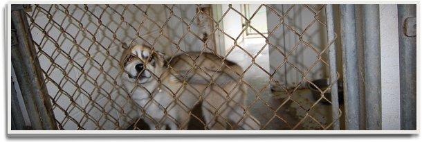 Pet boarding | Farmington, MO | Worrynought Kennels Inc | 573-756-9651