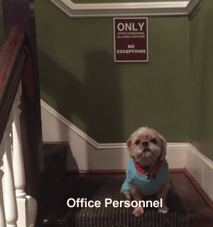 Office Personnel
