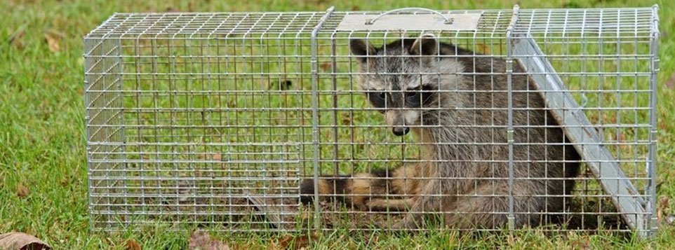 Wildlife Animal Removal Services