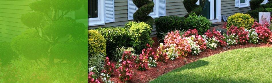 Exotic Flower Gardens