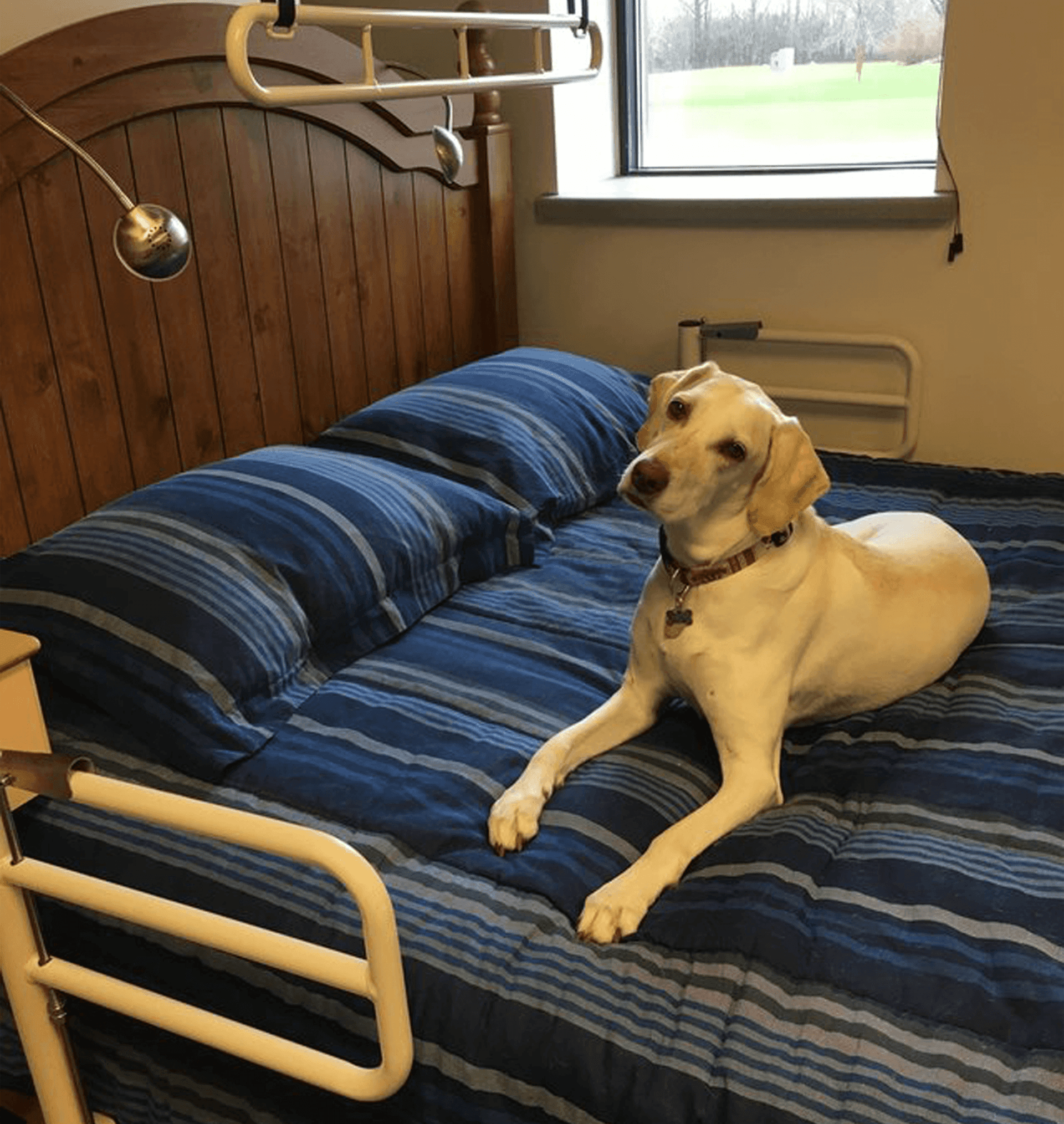 Bed Mobility Dog, Bed Transfer Made Easy