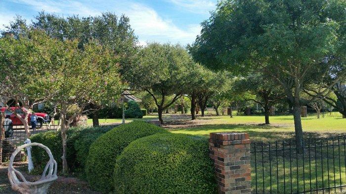 shrubs and tree service