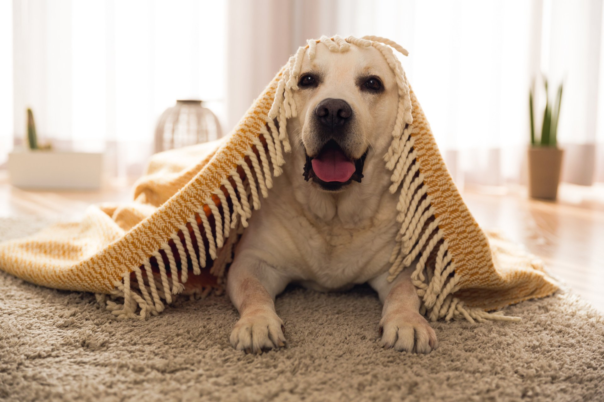 Can Carpet Cleaning Completely Eliminate Dog And Cat Urine