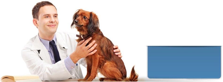 Veterinary  service | Guthrie, OK | Southpointe Veterinary Clinic | 405-282-2396