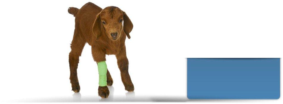 Veterinarian | Guthrie, OK | Southpointe Veterinary Clinic | 405-282-2396