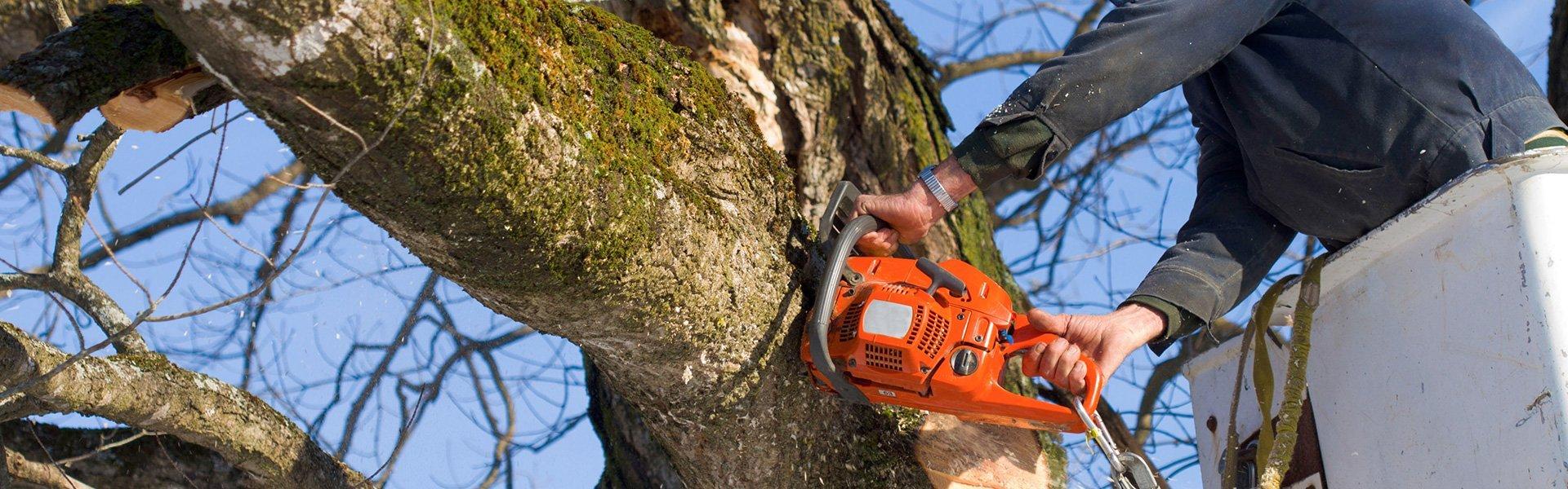 Tree Srvice