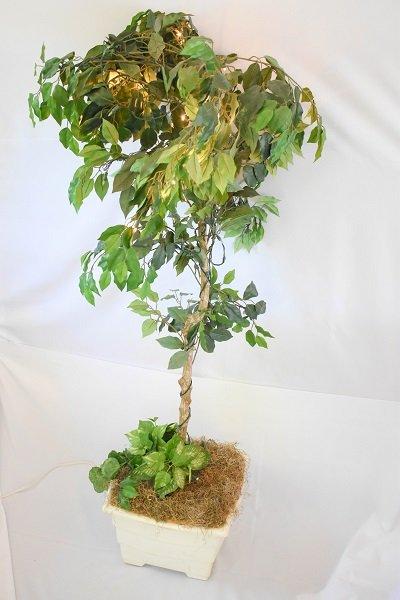Lighted Ficus Tree