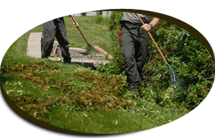 Lawn Care | Garden City Park, NY | Four Seasons Landscaping | 516-248-4539