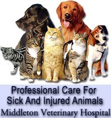Veterinarians Middleton, ID - Middleton Veterinary Hospital