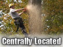 Tree Maintenance - La Vista, NE - OK Tree Service - Centrally Located
