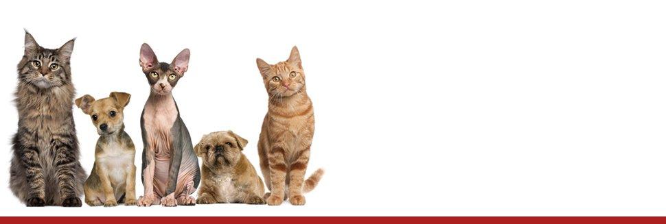 veterinary services | Barnesville, MN | Barnesville Animal Care Clinic | 218-354-2366